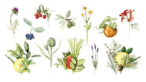 Shiere Melin, watercolor