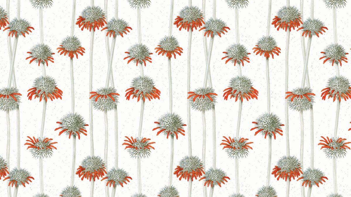 Shiere Melin, surface design, fabric, wallpaper, wrapping paper