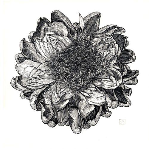 Shiere Melin, 2016, Pen and ink illustration, scratchboard