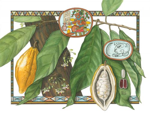 Shiere Melin, mixed media, ink wash, pen and ink, watercolor, chocolate, Mayan, medicine, elixir of love